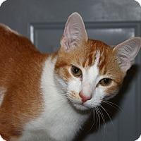 Adopt A Pet :: Jo Jo - North Branford, CT
