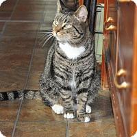 Adopt A Pet :: Romeo - Seminole, FL