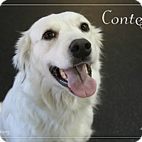 Adopt A Pet :: Contessa - Rockwall, TX