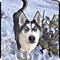 Adopt A Pet :: Arya - Adoption Pending! - Monument, CO
