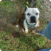 Adopt A Pet :: Moon - Jupiter, FL