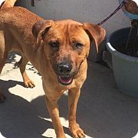 Adopt A Pet :: Ginger - Newport Beach, CA
