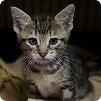 Adopt A Pet :: Avery - San Angelo, TX