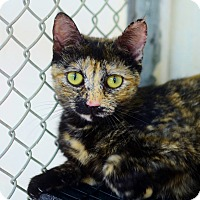 Adopt A Pet :: Maple - Greenwood, SC