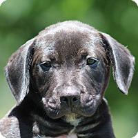 Adopt A Pet :: Ernie - Glastonbury, CT
