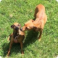 Adopt A Pet :: Dot & Penny - Fincastle, VA
