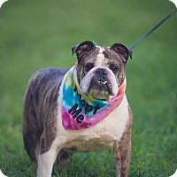 Adopt A Pet :: Maggie May - Boynton Beach, FL