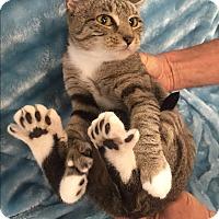 Adopt A Pet :: Tootzy aka Hippity hop - Highland Park, NJ