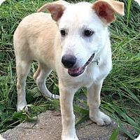 Adopt A Pet :: Kayla - New Oxford, PA