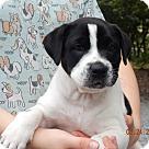 Adopt A Pet :: Kinko (8 lb) Video!