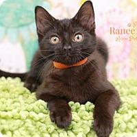 Adopt A Pet :: Marriott - Sterling Heights, MI