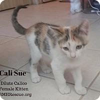 Adopt A Pet :: Cali Sue - Temecula, CA