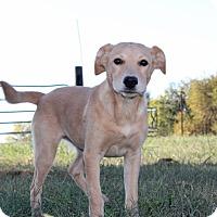 Adopt A Pet :: Sunshine - Harmony, Glocester, RI