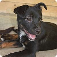 Adopt A Pet :: Willow - Morristown, NJ