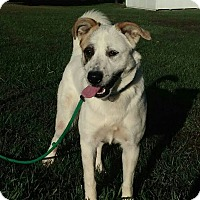 Adopt A Pet :: Ivy - Paris, IL