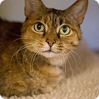 Adopt A Pet :: Fawn - Grayslake, IL