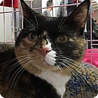 Adopt A Pet :: BEAUTY! - Philadelphia, PA