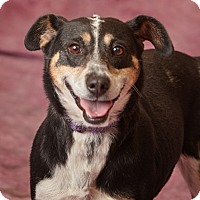 Adopt A Pet :: Tyra - Harrisonburg, VA