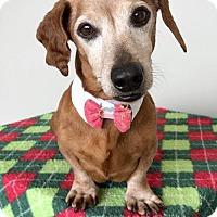 Adopt A Pet :: Hunter - Weston, FL