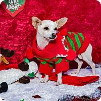 Adopt A Pet :: Holiday - San Marcos, CA