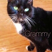 Adopt A Pet :: Grammy - York, PA