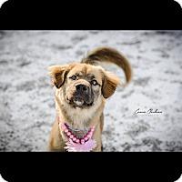 Adopt A Pet :: Gwennie - ADOPTED! - Zanesville, OH