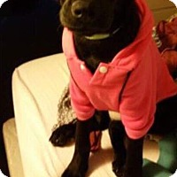 Adopt A Pet :: Whitney - Providence, RI