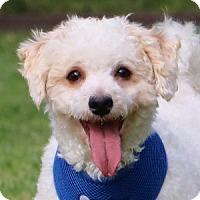 Adopt A Pet :: Pogo - La Costa, CA