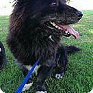 Adopt A Pet :: Milagro