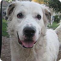 Adopt A Pet :: Murphy - Orange Park, FL