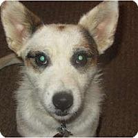 Adopt A Pet :: Meeko - Covington, KY