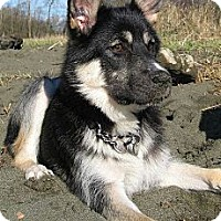 Adopt A Pet :: ATKA~ADOPTED! - North Vancouver, BC