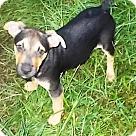 Adopt A Pet :: Liza