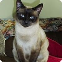 Adopt A Pet :: Oshana - Vancouver, BC