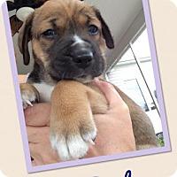 Adopt A Pet :: Bucky - Gainesville, FL
