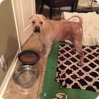 Adopt A Pet :: Caramel (fkaSugar)inTX-pending - Mira Loma, CA