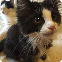 Adopt A Pet :: Alfie - Arlington, VA