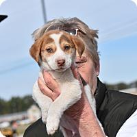 Adopt A Pet :: Wheeler - Charlemont, MA