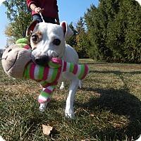 Adopt A Pet :: Wesley - Wisconsin Dells, WI