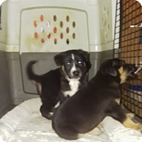 Adopt A Pet :: Dipper - springtown, TX
