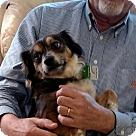 Adopt A Pet :: Beecher