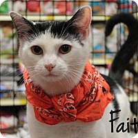 Domestic Shorthair Kitten for adoption in McDonough, Georgia - Faith