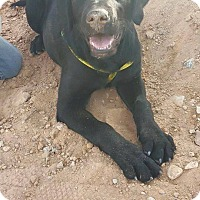 Adopt A Pet :: Ember - Las Vegas, NV