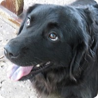 Adopt A Pet :: Cheyenne LOVES Children - St Petersburg, FL