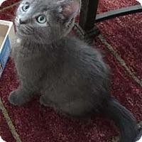 Adopt A Pet :: Maybelline - Merrifield, VA