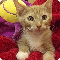 Adopt A Pet :: March - Scottsdale, AZ