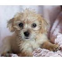 Adopt A Pet :: Starfish - Scottsdale, AZ