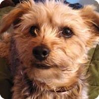 Adopt A Pet :: Teddy - Colorado Springs, CO