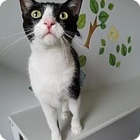Adopt A Pet :: Dory - China, MI