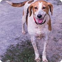 Hound (Unknown Type) Mix Dog for adoption in Fairfax, Virginia - Isabelle